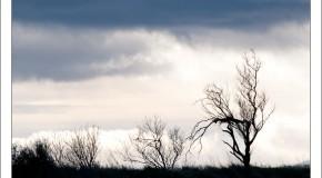 Paysages à contre jour – Janvier 2012