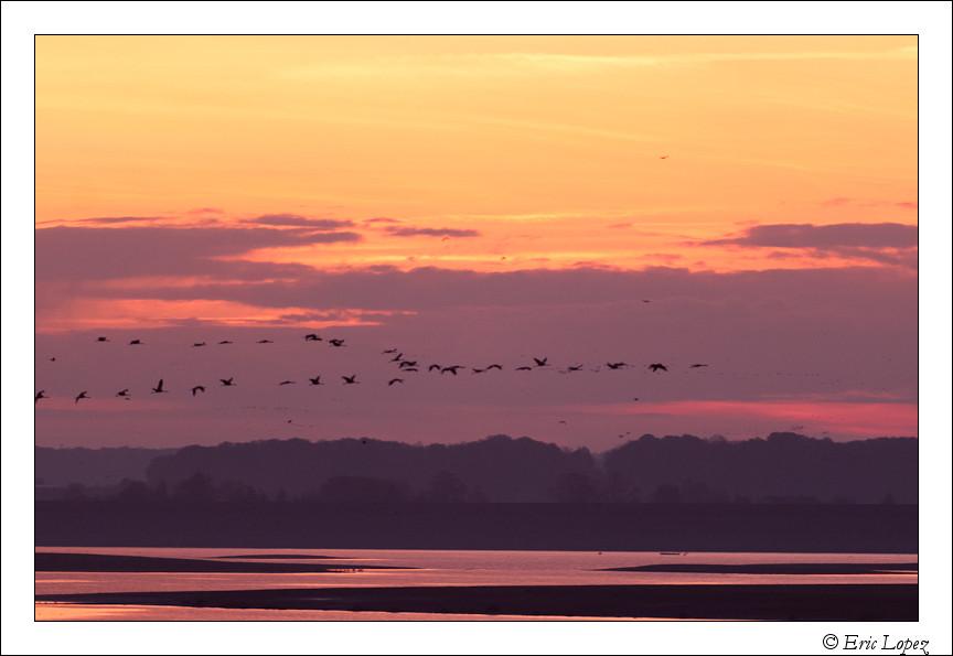 Vol au dessus du Lac du Der