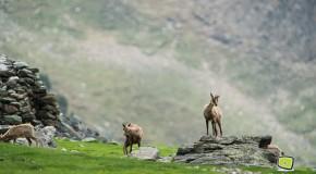 Juin 2012 – Trio de mammifères dans la Réserve Naturelle de la Vallée d'Eyne
