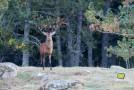 Octobre 2012 – Couleurs d'automne et brâme du Cerf en montagne