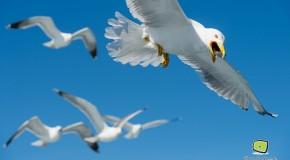 Sortie en bateau et au Parc des Aiguamolls – GOR 2013